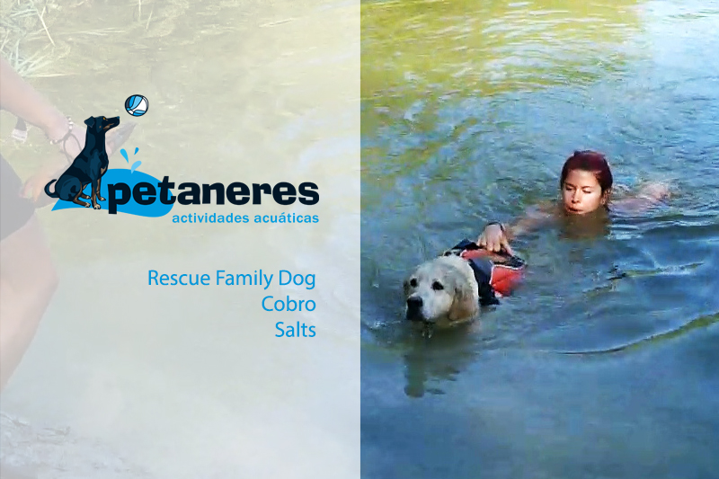 Petaneres - SALTS, COBRO, RESCUE FAMILY DOG
